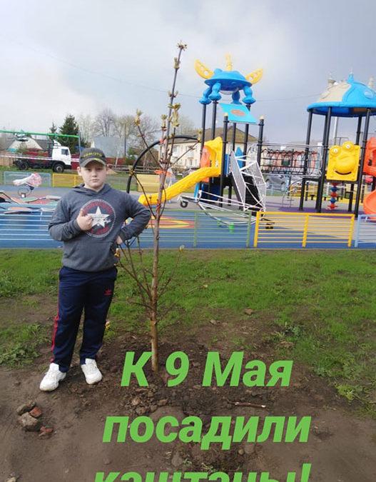 """""""Дерево Победы"""". Глеб Захаров"""